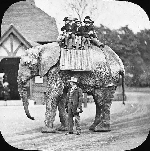 Barn rider på elefant
