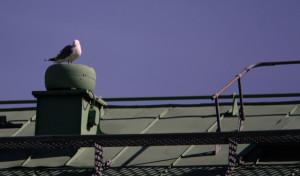 4 sätt att hålla fåglarna borta