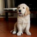 Elaka mäklaren: Till salu – Snygg lägenhet med hundhår och tassavtryck