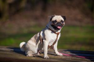 Elaka mäklaren: Inte döma hunden efter håren